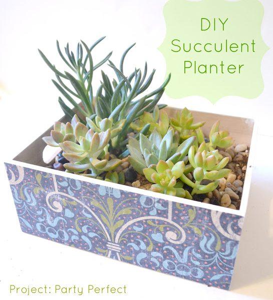 {DIY} Succulant Planter