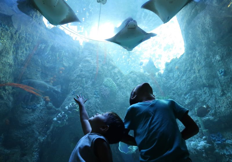 Aquarium of the Pacific Family Visit Guide