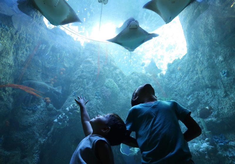 Aquarium of the Pacific Family Visit Guide