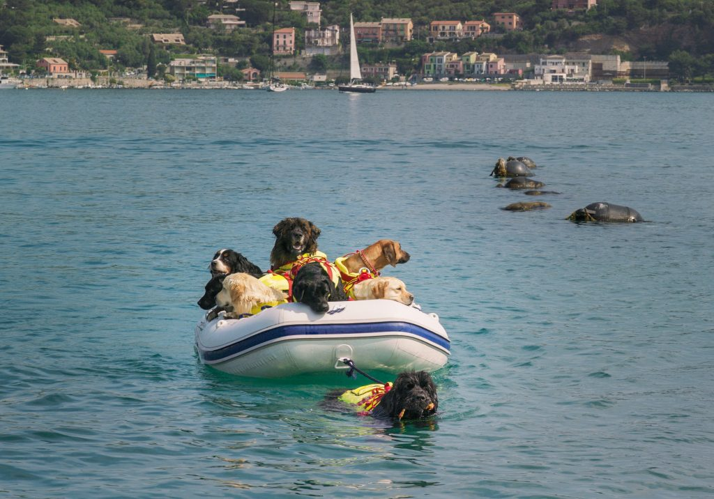 Water Rescue Training at Superpower Dogs