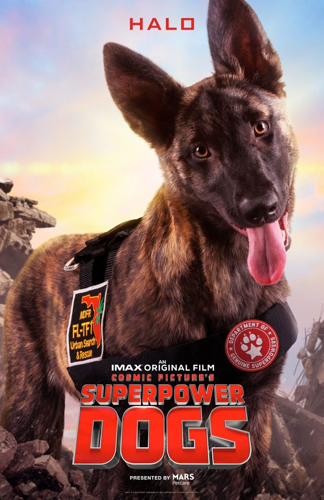 Halo from Superpower Dogs